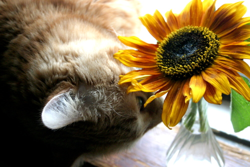 Max and a Sunflower